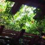 Cum sa construiesti o pergola în grădina casei